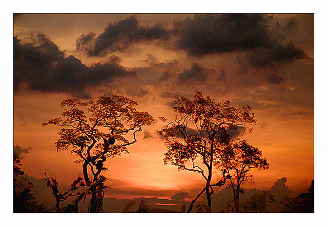 "photo ""Trees"" tags: landscape, montage, sunset"