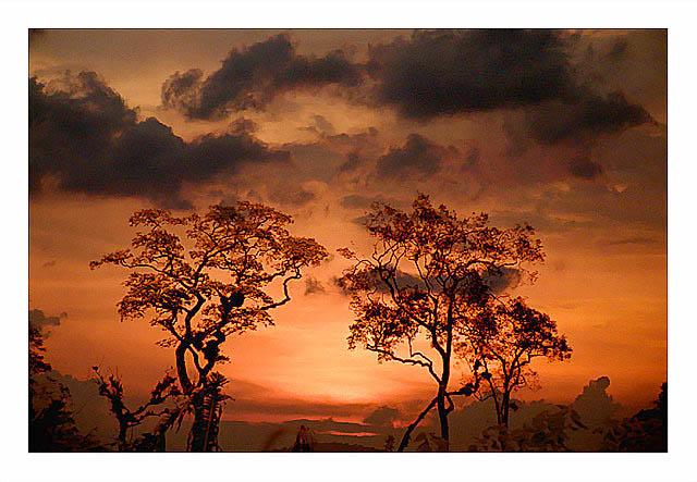 """фото """"Trees"""" метки: пейзаж, фотомонтаж, закат"""