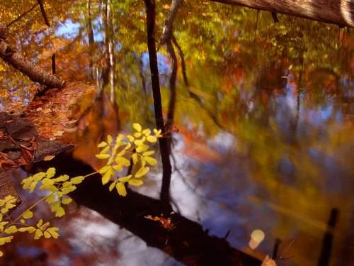 """фото """"Fall"""" метки: пейзаж, осень"""