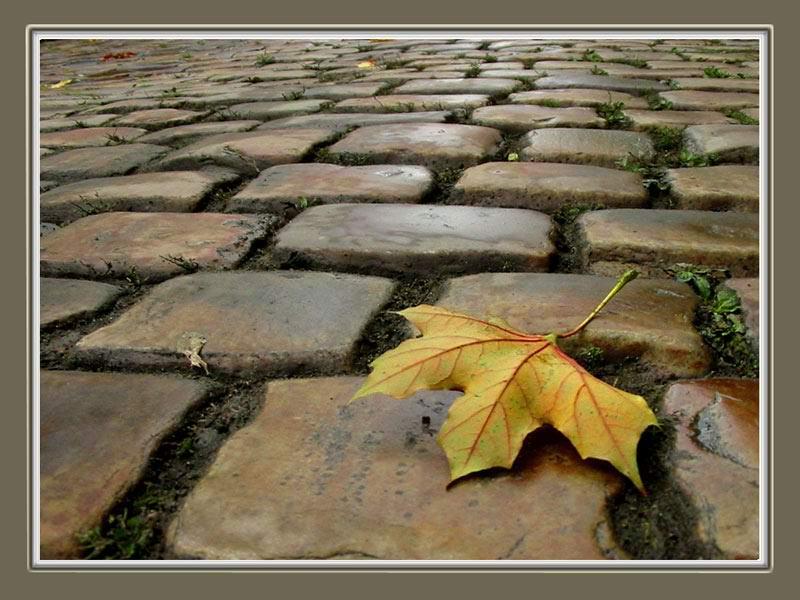 """photo """"Fallen"""" tags: landscape, autumn"""