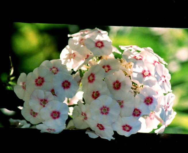 """фото """"Simplicity"""" метки: природа, пейзаж, весна, цветы"""