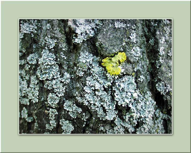 "photo ""Yellow Raven"" tags: macro and close-up, abstract,"