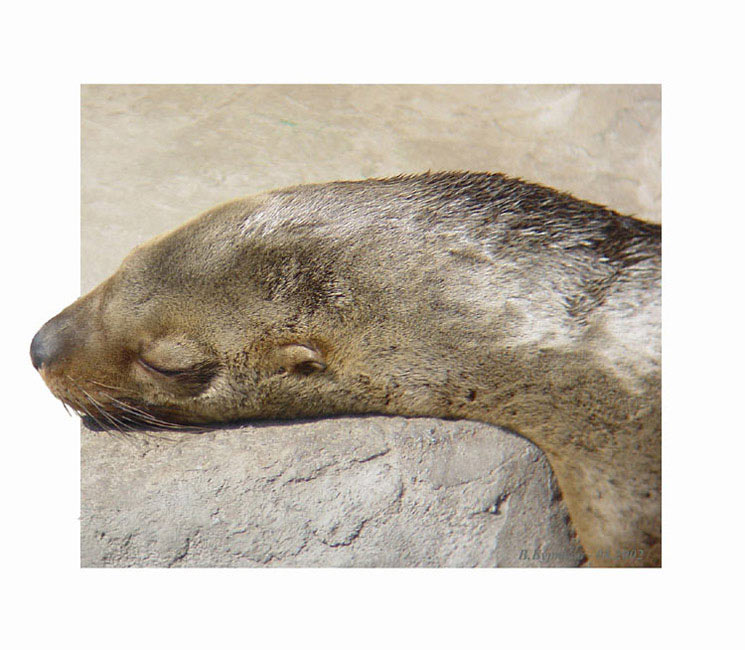 """фото """"Сладкий сон..."""" метки: природа, юмор, дикие животные"""
