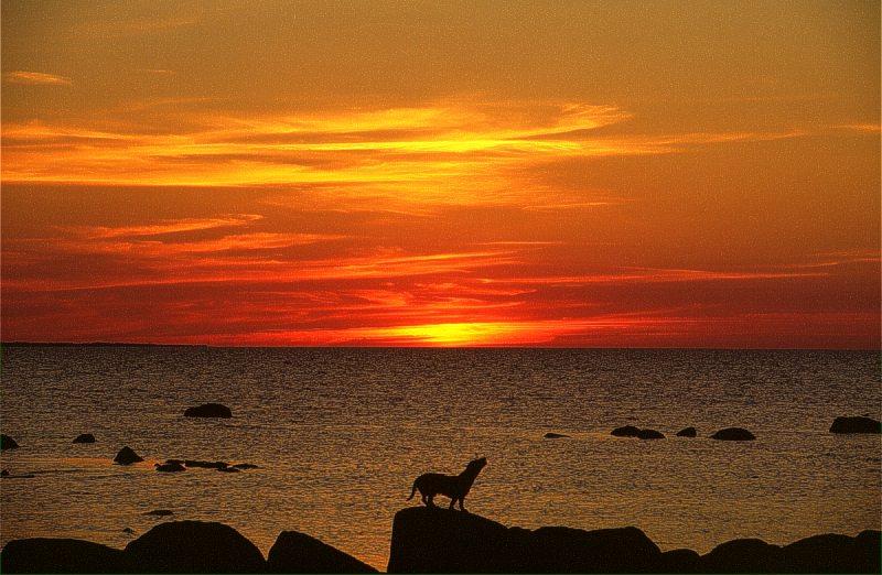 """фото """"Хозяин в море"""" метки: пейзаж, вода, закат"""