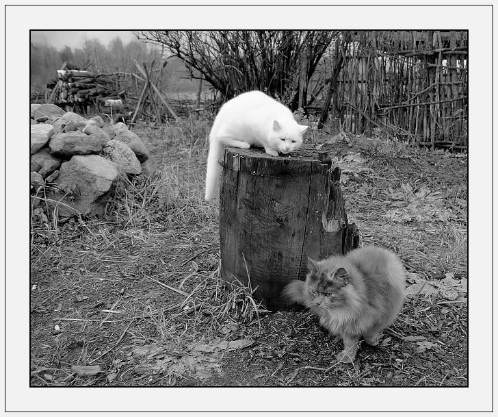 "photo ""M&W in BW"" tags: genre, nature, pets/farm animals"