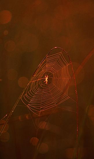 """фото """"Golden Arch"""" метки: природа, насекомое"""