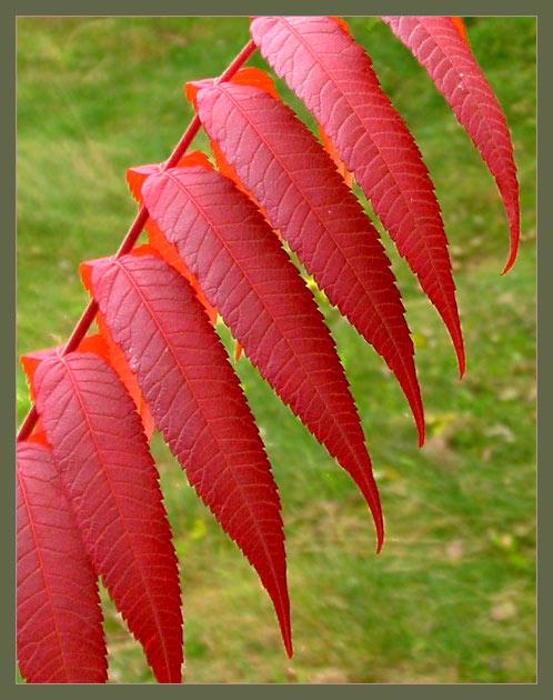 """photo """"The last colours of autumn"""" tags: landscape, autumn"""