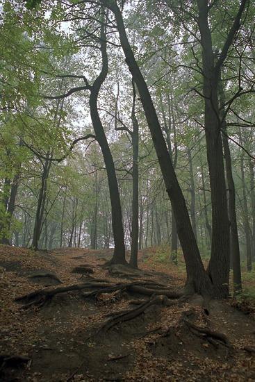 """фото """"Овраг"""" метки: пейзаж, лес"""