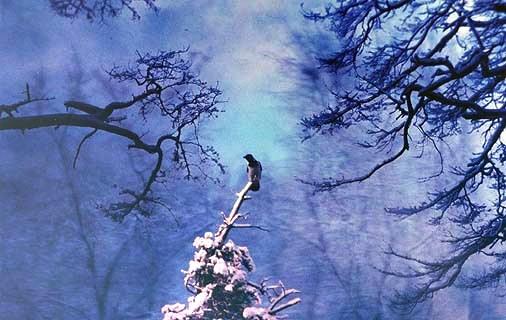 """фото """"Зима"""" метки: фотомонтаж, пейзаж, зима"""