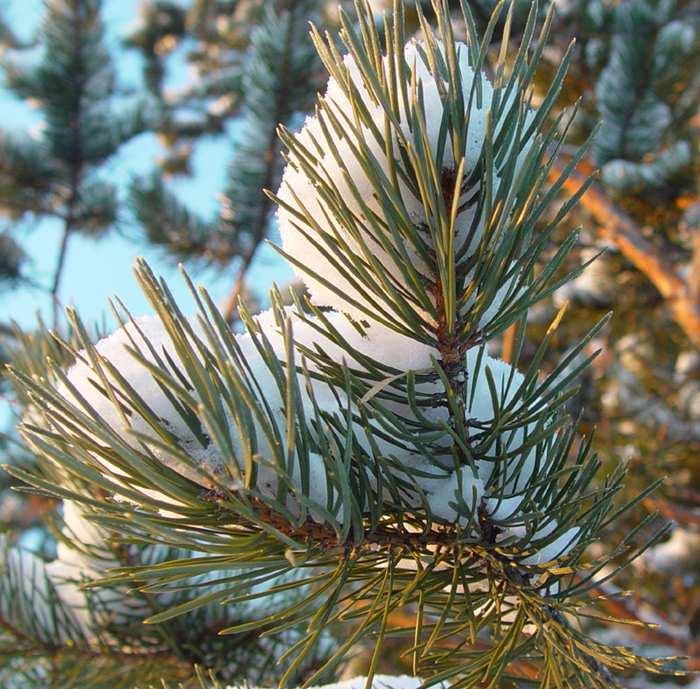 "фото ""Зимушка-зима..."" метки: макро и крупный план, природа,"