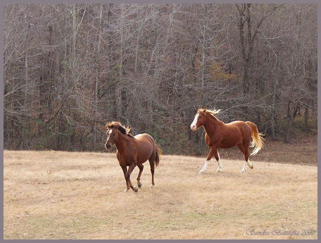 "фото ""Follow Me! Hurry Up!"" метки: природа, юмор, домашние животные"