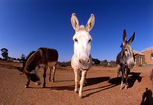 "фото ""Silverton"" метки: путешествия, Австралия"