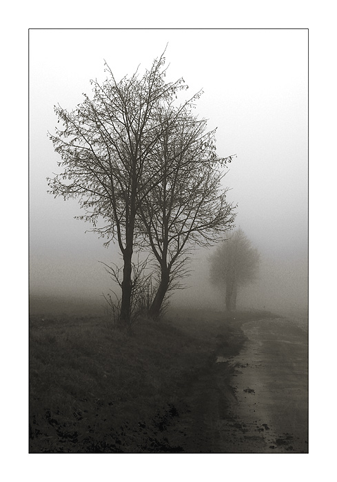 "photo ""A Foggy Day II"" tags: nature, landscape, autumn, flowers"