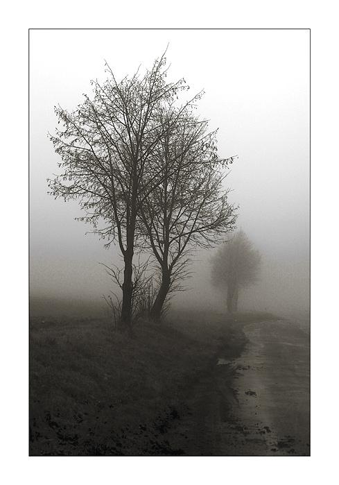 "фото ""A Foggy Day II"" метки: природа, пейзаж, осень, цветы"