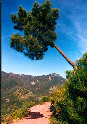"""фото """"The pine tree"""" метки: пейзаж, лето"""
