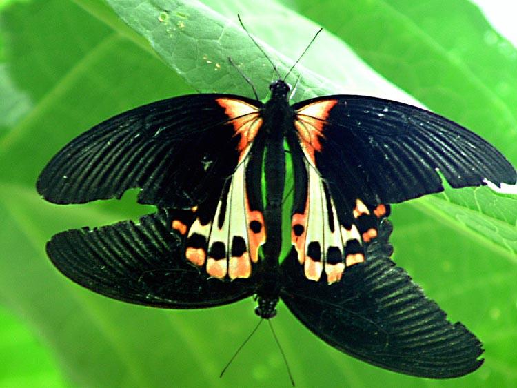 "фото ""Friendly"" метки: природа, насекомое"