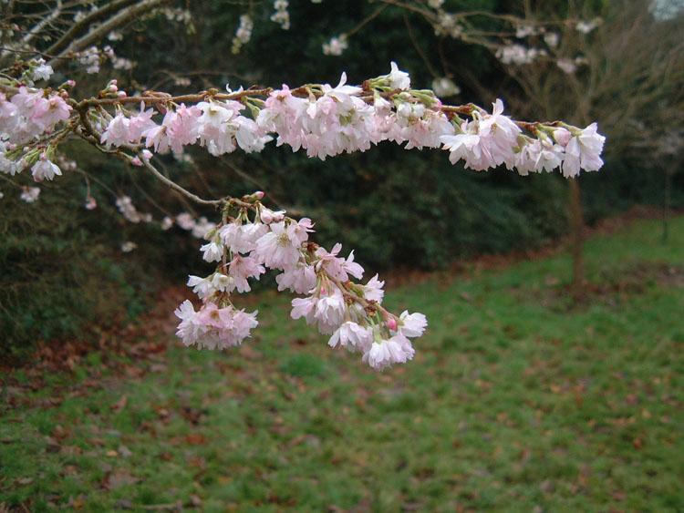 "фото ""Winter Bloom"" метки: природа, цветы"