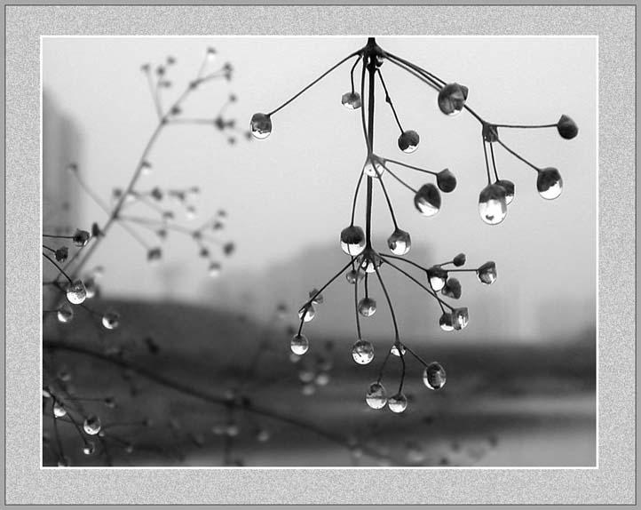 """фото """"После дождичка в четверг"""" метки: натюрморт, природа, цветы"""