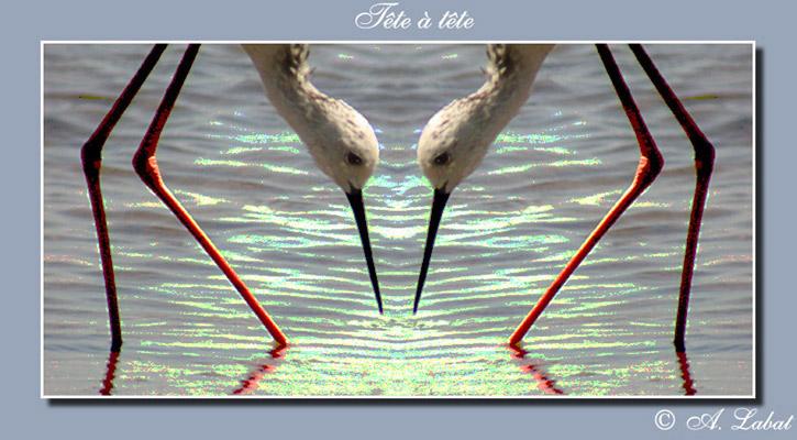 "photo ""tete  а tete"" tags: montage,"