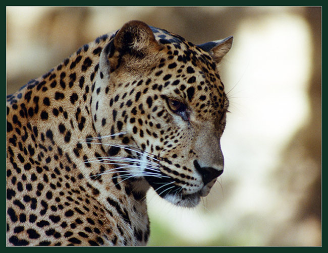 "фото ""Киса"" метки: природа, дикие животные"