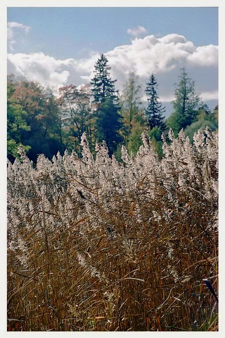 "фото ""Добрый день!"" метки: пейзаж, осень"