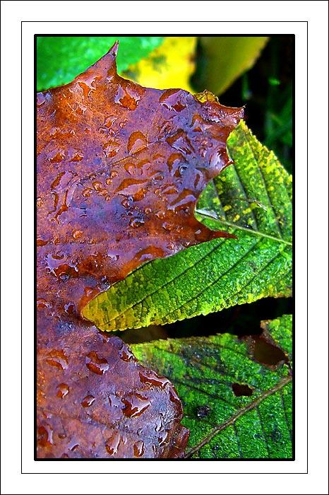 """фото """"Colours in nature"""" метки: макро и крупный план, природа, цветы"""