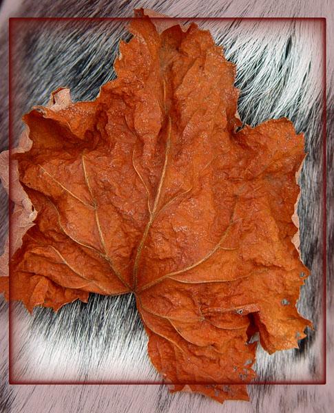 "фото ""Winter Leaf"" метки: природа, цветы"