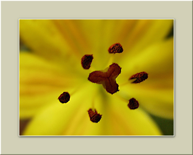 "photo ""Pure Yellow Macro"" tags: macro and close-up, nature, flowers"