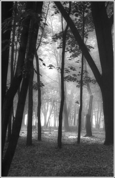 """фото """"Сонная Лощина (часть 1)"""" метки: пейзаж, природа, лес, цветы"""