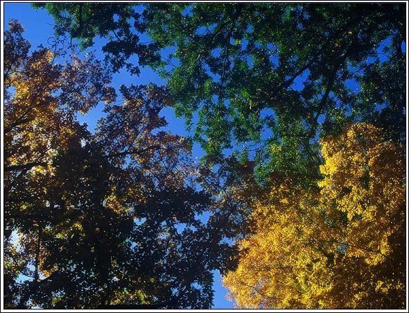 """фото """"End of Summer"""" метки: пейзаж, лес, лето"""