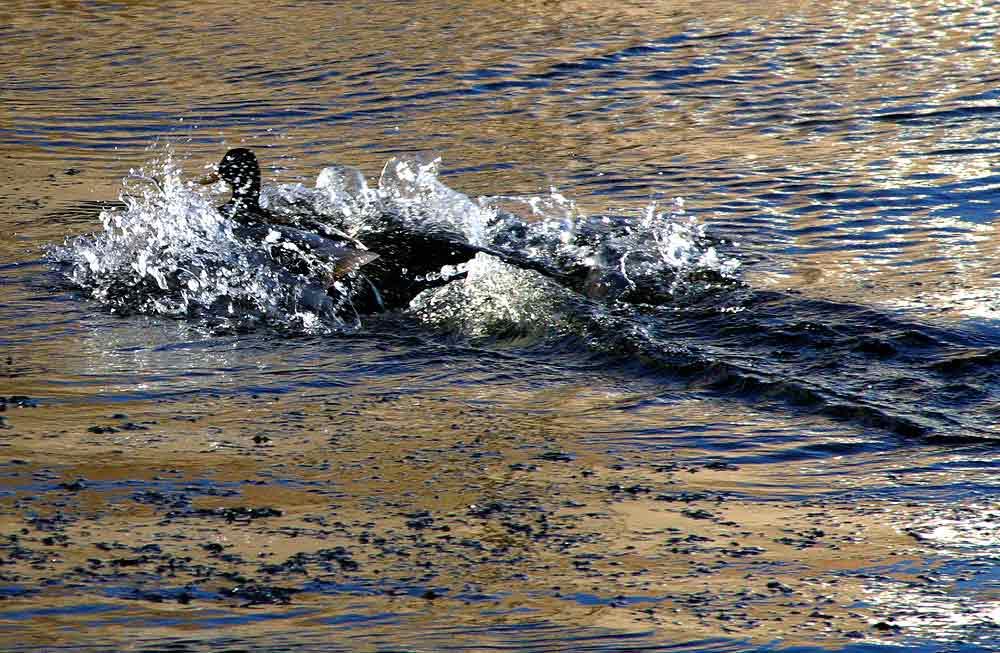 "photo ""Splash"" tags: nature, wild animals"