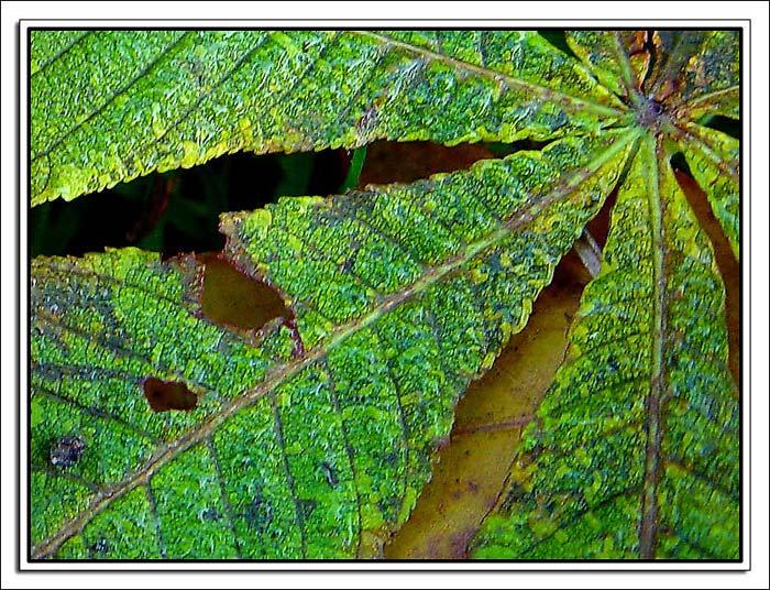 """фото """"Pattern in nature"""" метки: макро и крупный план, природа, цветы"""