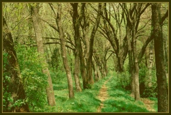 """фото """"FOREST-2"""" метки: пейзаж, лес, лето"""