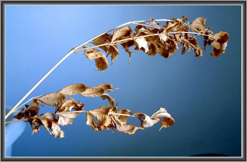 """photo """"Autumn still life"""" tags: misc.,"""
