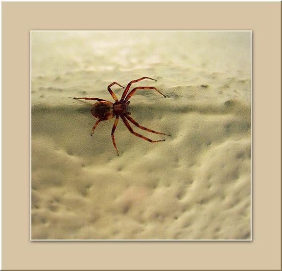 """фото """"Красный пограничник :)"""" метки: макро и крупный план, природа, насекомое"""