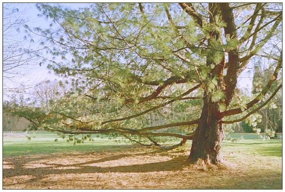 """фото """"Sosna"""" метки: пейзаж, лес, осень"""