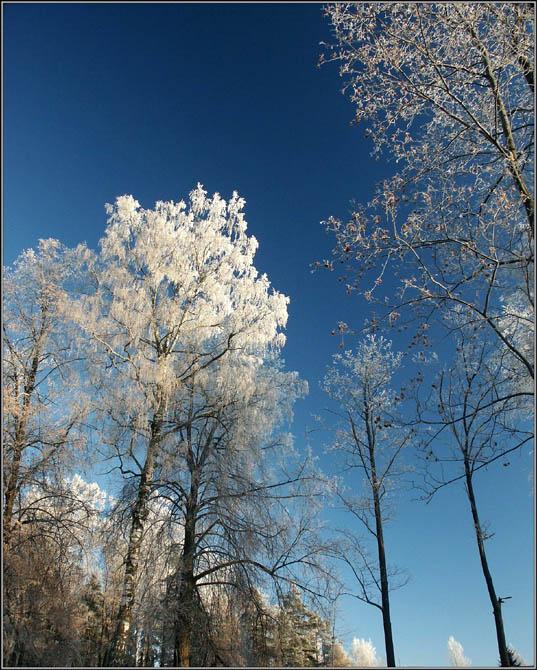 """фото """"Лес зимой-2"""" метки: пейзаж, зима, лес"""