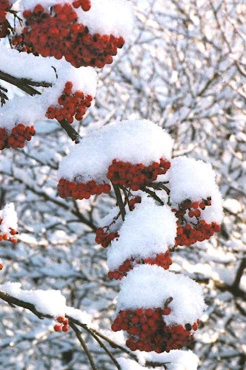 """фото """"Crunchy snow"""" метки: пейзаж, зима"""