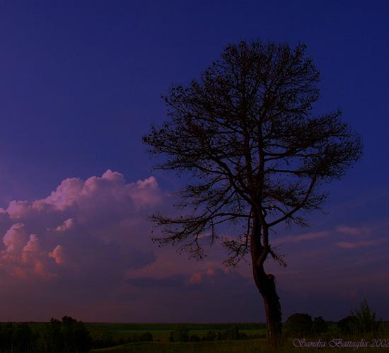 "фото ""Taller Than All"" метки: пейзаж, закат, облака"