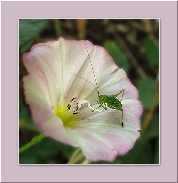 """фото """"Завтрак на траве"""" метки: макро и крупный план, природа, насекомое"""