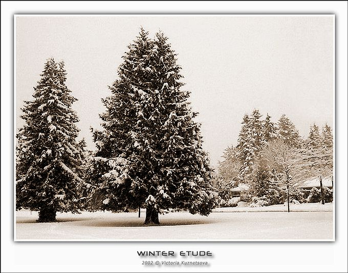 "photo ""Winter etude"" tags: landscape, winter"