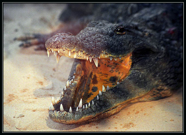 """photo """"Say Cheese"""" tags: nature, wild animals"""