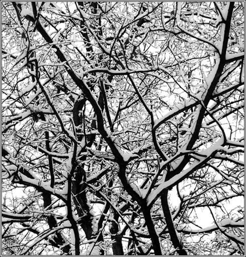 "фото ""Winter"" метки: природа, пейзаж, зима"