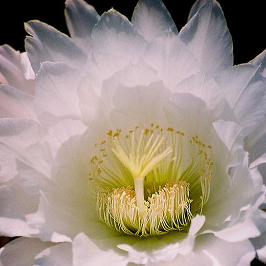 """фото """"Flower 2"""" метки: макро и крупный план,"""