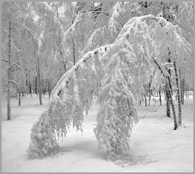 """фото """"Снежный поклон"""" метки: пейзаж, природа, зима, цветы"""