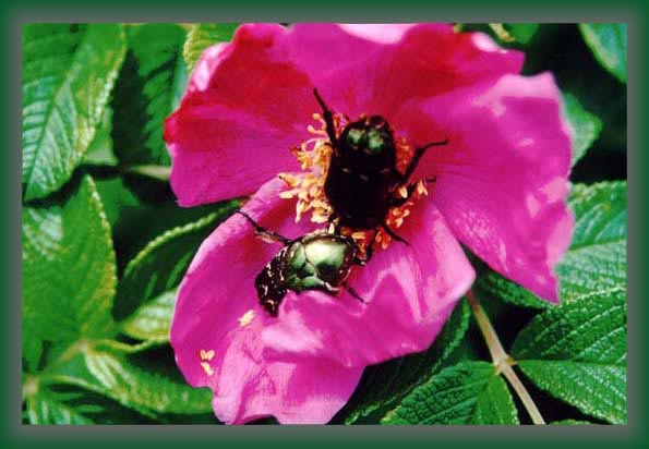 """фото """"Вот и всреча !"""" метки: природа, цветы"""
