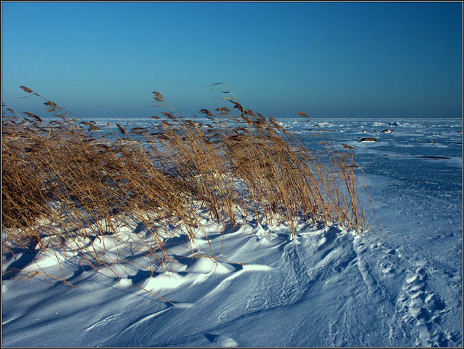 "photo ""Reed and wind..."" tags: landscape, winter"