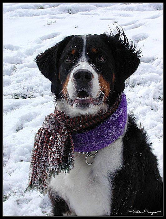 "photo ""Snow Dog 2"" tags: nature, humor, pets/farm animals"