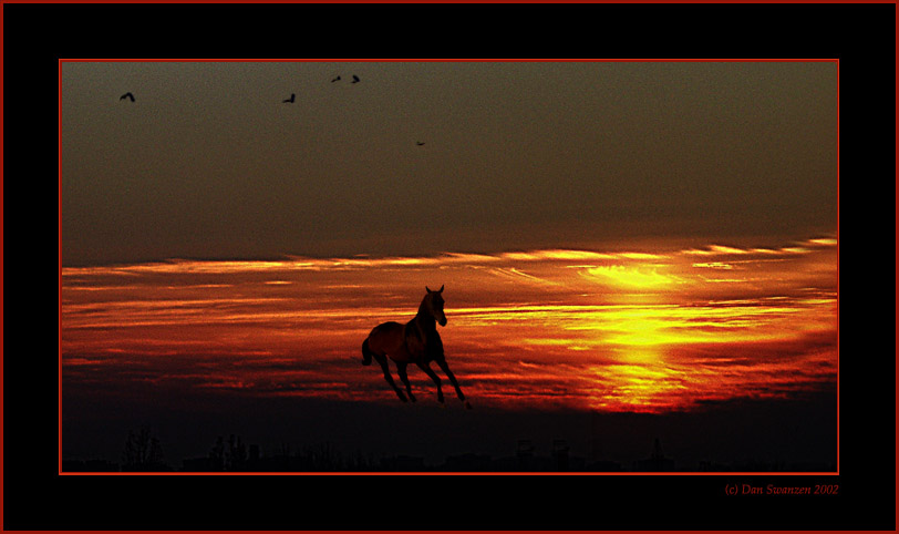 "photo ""Youth..."" tags: landscape, nature, pets/farm animals, sunset"