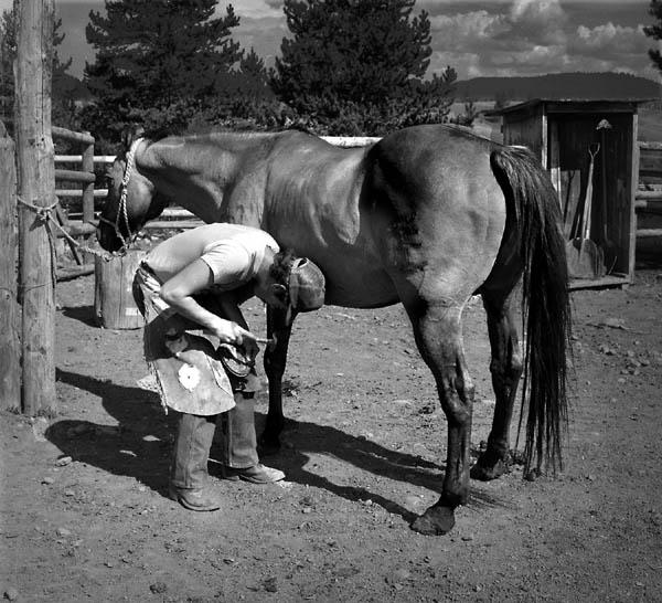 "фото ""Shoeing"" метки: природа, жанр, домашние животные"